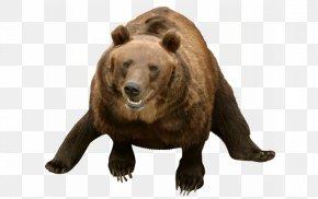Bear - Grizzly Bear American Black Bear Animal Sticker PNG