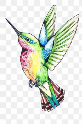 Hummingbird Tattoos Clipart - Hummingbird Beak Wing Feather Illustration PNG