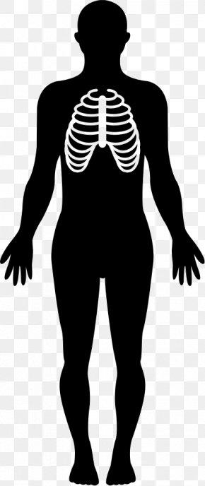 Human Body - Human Body Homo Sapiens Clip Art PNG