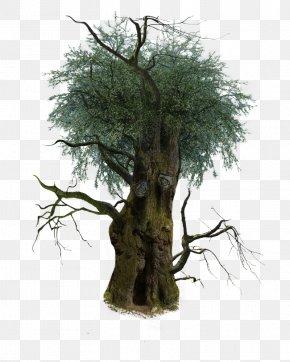 Tree - Tree Branch Trunk Plants Oak PNG