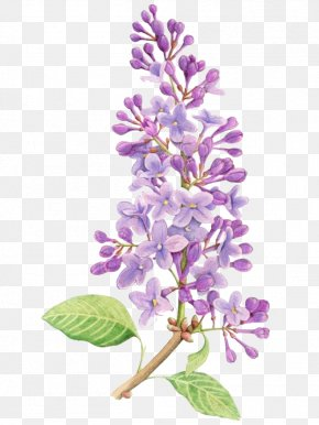 Purple Flowers - Lilac Flower Drawing Tattoo Watercolor Painting PNG