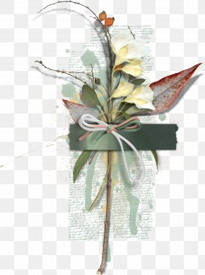 Creative Floral Specimens - Biological Specimen Biology Petal PNG
