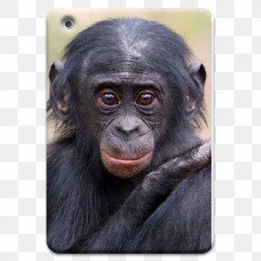 Gorilla - Common Chimpanzee Gorilla Apenheul Primate Park Monkey PNG