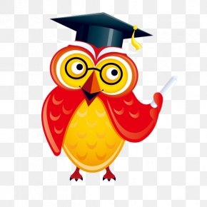 Owl - Information PNG