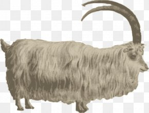 Vector Goat - Mountain Goat Barbary Sheep Clip Art PNG