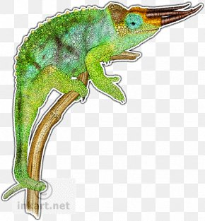 Chameleon - Chameleons Reptile Lizard Drawing Panther Chameleon PNG