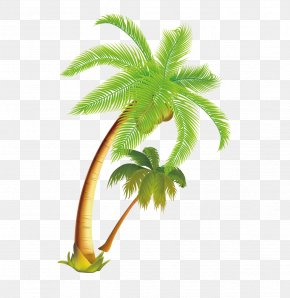 Tropical Coconut Tree Vector Material - Arecaceae Coconut Tree PNG