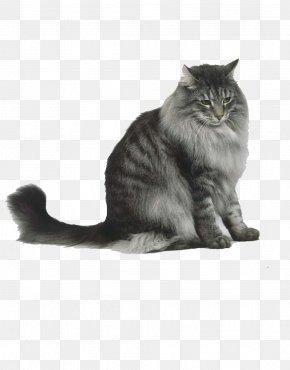 Watercolor Cat - Norwegian Forest Cat Siberian Cat Maine Coon Persian Cat Cymric Cat PNG
