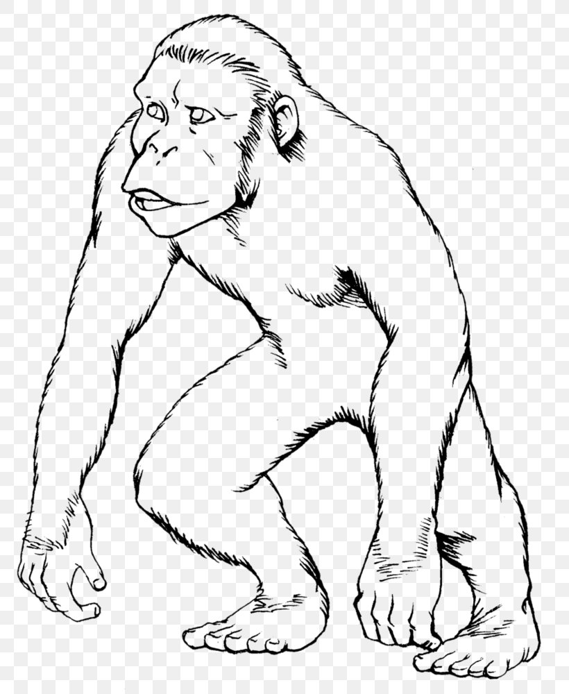 Ape Gorilla Drawing Monkey Coloring Book, PNG, 798x1000px, Watercolor, Cartoon, Flower, Frame, Heart Download Free