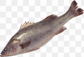 Fish - Salmon Fish Products Sardine Trout Cod PNG