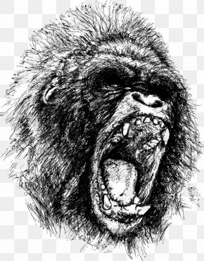 Gorilla Sketch Vector - Gorilla Ape King Kong Drawing Anger PNG