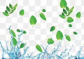 Water Droplets Green Leaf Border - Download Wallpaper PNG