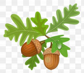 Transparent Leaves With Acorns - Acorn Royalty-free Clip Art PNG