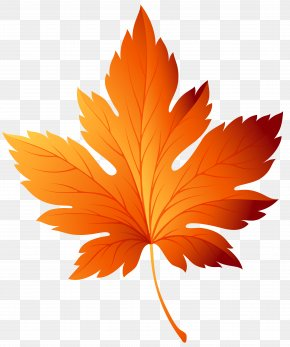 Autumn Leaf Transparent Clip Art Image - Autumn Leaf Color Clip Art PNG