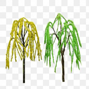 Willow Trees - Tree Twig Plant Stem Grasses PNG