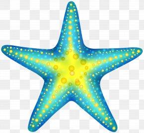 Starfish - Starfish Computer File PNG