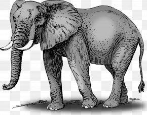Elephant Cliparts - African Bush Elephant Asian Elephant Clip Art PNG