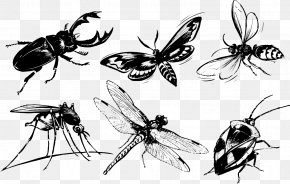Insects Ink - Beetle Butterfly Mosquito Cdr PNG