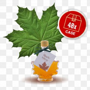 Maple Leaf - Maple Syrup Maple Leaf Leaf Vegetable PNG