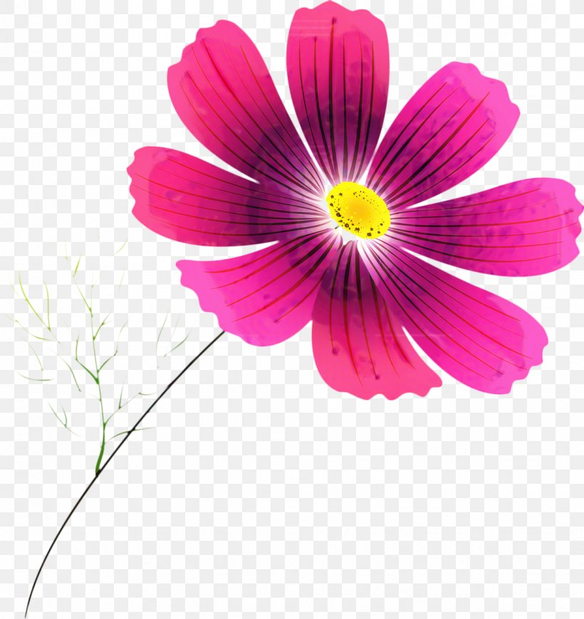 Pink Flower Cartoon Png 1131x1200px Garden Cosmos Annual Plant