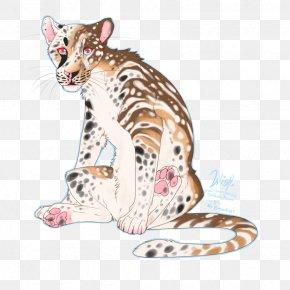 Tiger - Ocelot Whiskers Tiger Lion Big Cat PNG