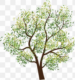 Drawing Summer Tropical Plants - Tree Branch Clip Art PNG