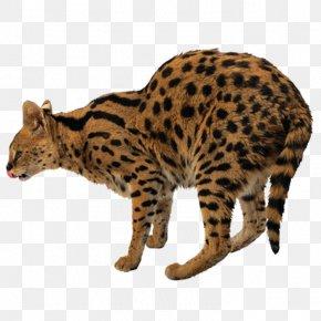 Leopard - Leopard Tiger Felidae Lion Cat PNG