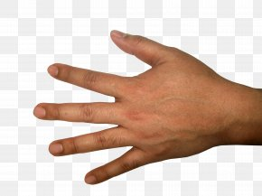 Hands Hand Image - Icon Hand PNG