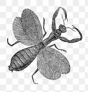 Free Insect Photos - Insect Digital Stamp Postage Stamp Free Content Clip Art PNG