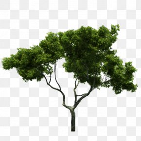 Trees,Branches,trunk,Trees,green,spring - Tree Branch PNG