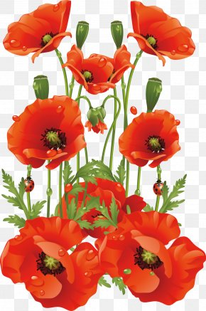 Hand-painted Flowers Background Material - Common Poppy Flower California Poppy PNG