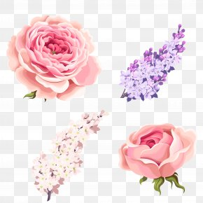 Rose,Pink Roses,Medicago - Garden Roses Centifolia Roses Beach Rose Pink PNG