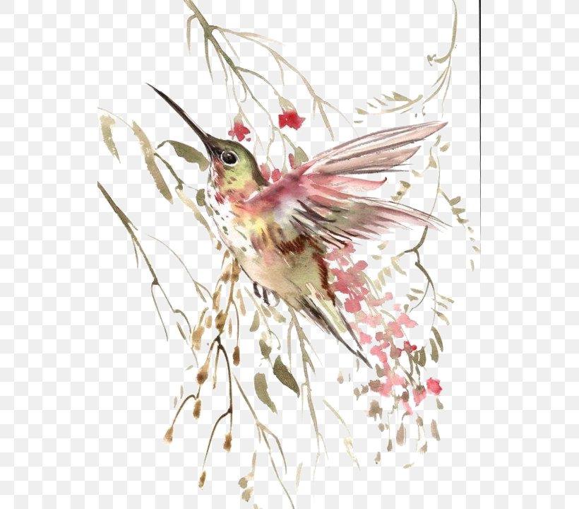 Hummingbird Flight Watercolor Painting, PNG, 543x720px, Bird, Art, Beak, Branch, Creative Work Download Free