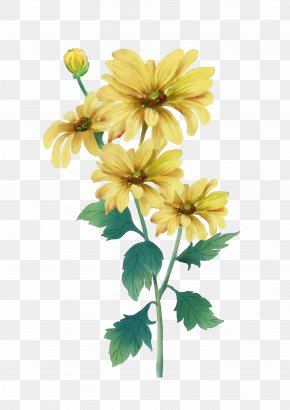 Yellow Chrysanthemum - Double Ninth Festival Chrysanthemum Watercolor Painting Yellow PNG