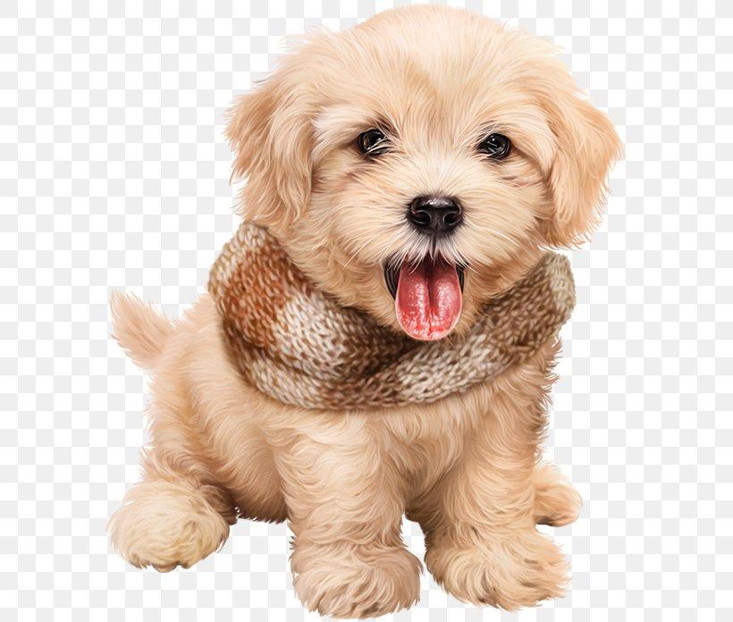 Dog Puppy Desktop Wallpaper Clip Art Png 585x696px Dog Blog Carnivoran Cavachon Cavapoo Download Free