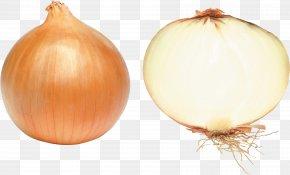 Onion Image - Onion Vegetable Clip Art PNG