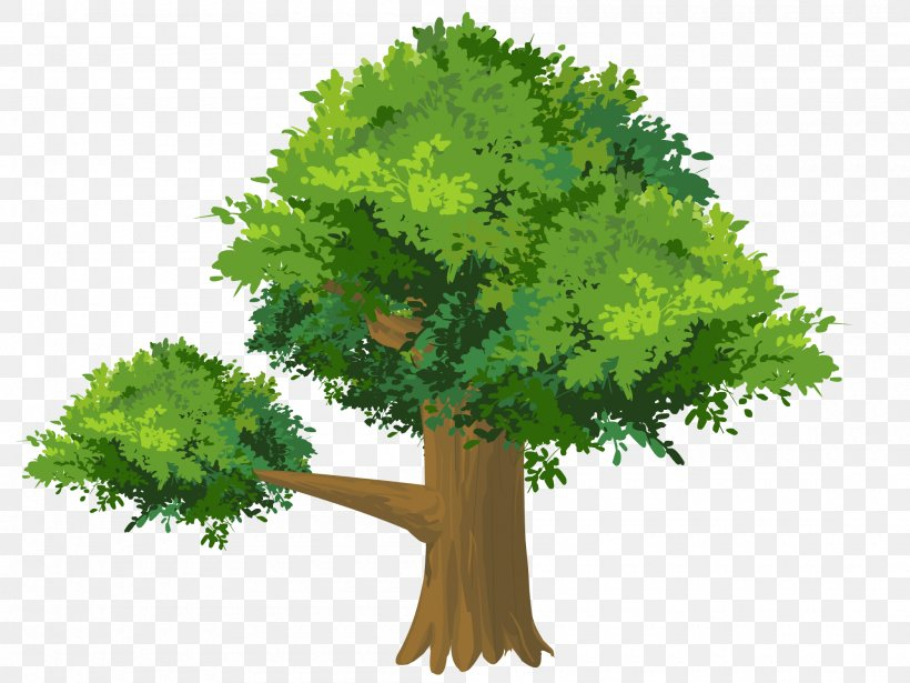 Cartoon Drawing Tree Png 2000x1500px Cartoon Animation Branch Designer Drawing Download Free Find & download free graphic resources for trees cartoon. favpng com