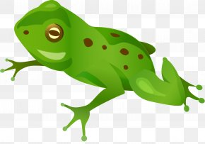Circulatory System Of Frog - Frog Clip Art Desktop Wallpaper Image PNG