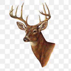 Deer - White-tailed Deer Painting Printmaking AllPosters.com PNG