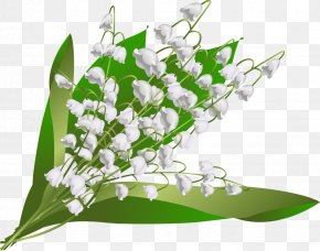 Lily Of The Valley - Flower May 1 Floral Design Floristry Hauts-de-Seine PNG