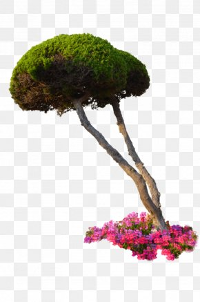 Plants - Plant Flower Tree Shrub PNG