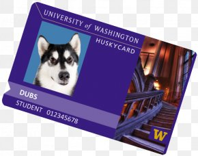 University Of Washington - Siberian Husky Washington Huskies Men's Basketball Student University Of Washington College Of Arts And Sciences PNG