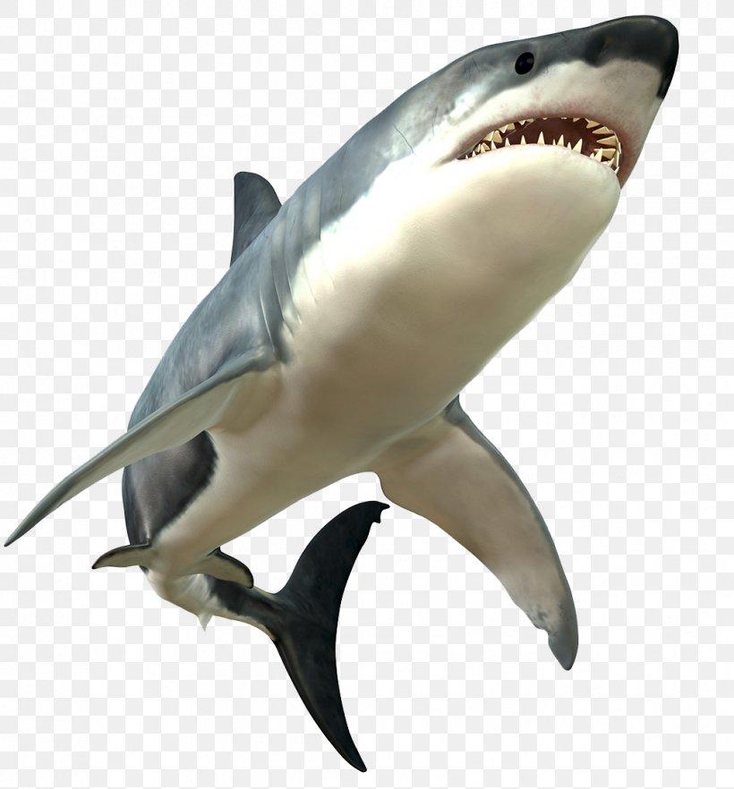 Great White Shark Bull Shark, PNG, 1033x1112px, Carcharhiniformes, Ampullae Of Lorenzini, Bull Shark, Cartilaginous Fish, Fauna Download Free