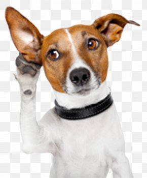 Attention - Dog Facts Puppy Cat Police Dog PNG