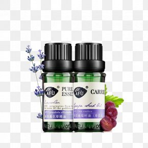 Lavender Essential Oil - Essential Oil Lavender Oil PNG