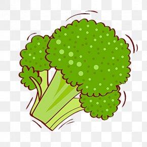 Cauliflower - Broccoli Cauliflower Illustration PNG