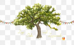 Live Oak - Tree Trunk Watercolor Painting Northern Red Oak Clip Art PNG