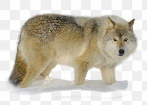 Nikita - Alaskan Tundra Wolf Coyote Snout Fur Gray Wolf PNG