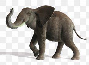 Elephant File - Asian Elephant Lion Art PNG