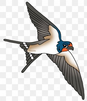 Swallow Cliparts - Barn Swallow Bird Clip Art PNG